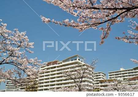 Apartment and cherry tree 9356617
