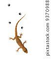 Small lizard over white background 9370988