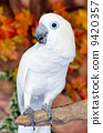 parrot, macaw, pets 9420357
