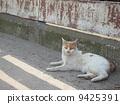 Loose cat 9425391