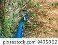 animal, beautiful, blue 9435302
