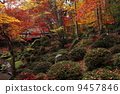 scattered, autumn, leaves 9457846