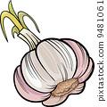 garlic, vegetable, illustration 9481061