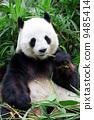 asian, asia, bear 9485414