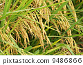 agriculturalist, agriculturist, asia 9486866