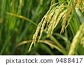 agriculturist, agriculture, agriculturalist 9488417