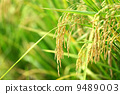 agriculturist, agriculture, agriculturalist 9489003
