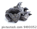 Horn Shaped Water Caltrop 9490052