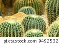 加州 加利福尼亚 沙漠 9492532