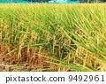 agriculturist, agriculture, agriculturalist 9492961