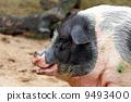 脂肪 哺乳動物 豬肉 9493400