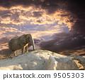 Elephant at sunset 9505303