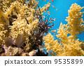 水下 珊瑚 異國情調 9535899