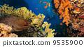 水下 珊瑚 異國情調 9535900