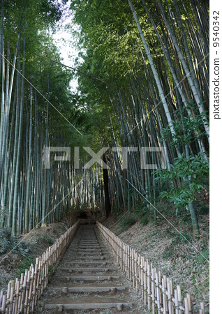 Bamboo grove 9540342