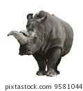 rhinoceros, rhino, mammal 9581044