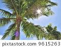 棕櫚樹藍天 9615263