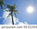 棕櫚樹藍天 9615264
