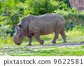 Rhino 9622581