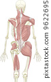 anatomy skeletal skeleton 9622695