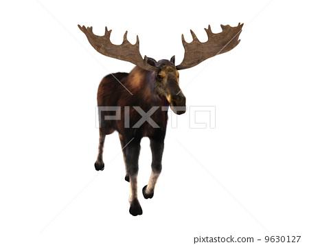 麋鹿 9630127