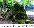 stub, stump, stumps 9633727