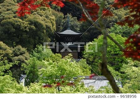 Garden view of Kyoto Eikan-do 9658956