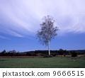 early, autumn, white 9666515