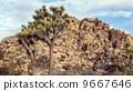 desert, california, cactus 9667646