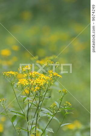 花朵 花卉 花 9674249