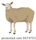 sheep, shepherd, web 9679753