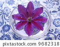 clematis, bloom, blossom 9682318