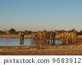 Elephant and giraffe of Etosha National Park 9683912