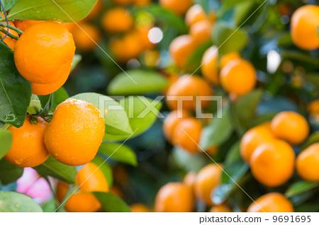 Citrus Fruit 9691695