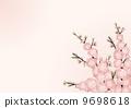 桃子開花背景01_風景 9698618