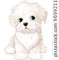 Maltese Puppy Dog 9699211