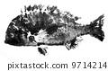 Kurodai的魚 9714214