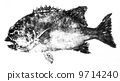 Ishidai的魚 9714240
