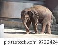 Elephant 9722424