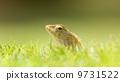lizard creature animal 9731522