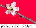 branch, botanical, blossom 9732036