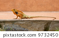 animal vertebrate reptile 9732450