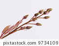 branch, botanical, blossom 9734109