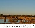 Elephant family 9735815