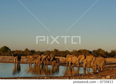 大象 小组 团队 9735815