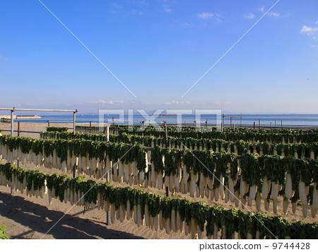 三浦海岸在冬天 9744428