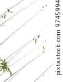 竹子 9745994