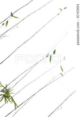 bamboo 9745994