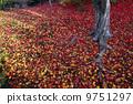 scattered, autumn, leaves 9751297