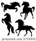 set of fine horses silhouettes - detailed black animals over white 9759899